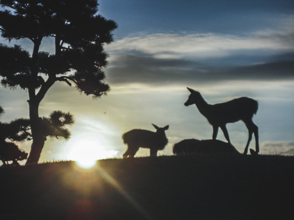 Three deer silhouetted against the rising sun